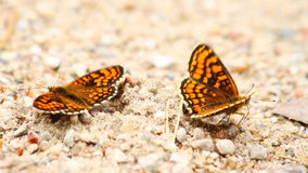 Mariposas en la arena almacen de video