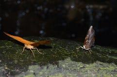Mariposas en la noche Fotografía de archivo