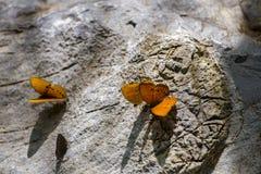 Mariposas en la piedra Fotos de archivo libres de regalías