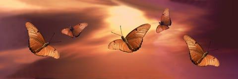 Mariposas en la puesta del sol Imágenes de archivo libres de regalías