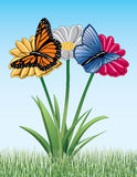 Mariposas en margaritas Imagenes de archivo