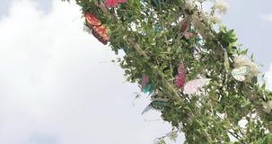 Mariposas en un arco decorativo almacen de metraje de vídeo