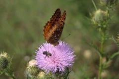 Mariposas en un campo Imágenes de archivo libres de regalías
