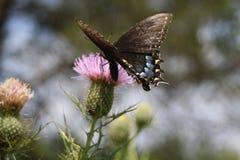 Mariposas en un campo Fotografía de archivo libre de regalías