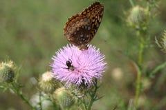 Mariposas en un campo Fotos de archivo