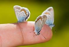 Mariposas en un dedo Fotografía de archivo