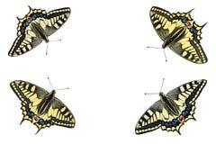 Mariposas en un fondo blanco - foto 5 Imagen de archivo libre de regalías