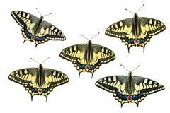 Mariposas en un fondo blanco - foto 1 Imagenes de archivo