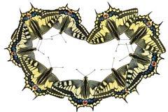 Mariposas en un fondo blanco - foto 3 Fotos de archivo