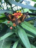 Mariposas en un helecho Fotos de archivo