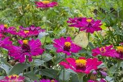 Mariposas en un jardín de flores hermoso fotos de archivo