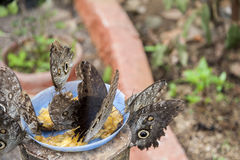 Mariposas en un oasis ecológico Imagen de archivo libre de regalías