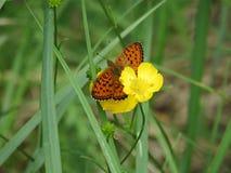 Mariposas en un prado imagenes de archivo