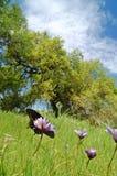 Mariposas en un prado Fotos de archivo