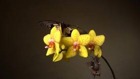 Mariposas en una flor almacen de video