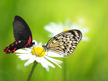 Mariposas exóticas Imagen de archivo libre de regalías