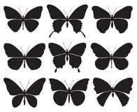Mariposas fijadas Imagenes de archivo
