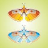 Mariposas hermosas en el fondo azul blanco Fotos de archivo libres de regalías