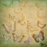 Mariposas multicoloras Imagen de archivo