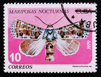 Mariposas Nocturnas夜飞蛾和展示Heterochroma sp Noctuidae家庭飞蛾,大约1979年 库存图片