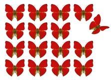 Mariposas que muestran el concepto de diferencia, individualidad, muchedumbre, situación hacia fuera, libertad, foto de archivo