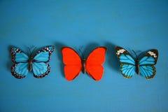 Mariposas rojas y decorativo azul Imagenes de archivo