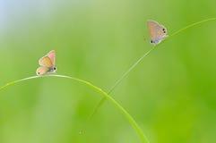 Mariposas románticas en la hierba con el fondo borroso Fotos de archivo libres de regalías