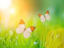 Mariposas sobre hierba Imagen de archivo libre de regalías