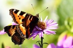 Mariposas y flores Imagenes de archivo