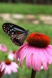 Mariposas y flores. Fotos de archivo