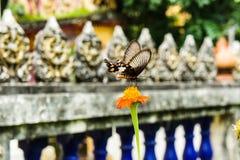 Mariposas y flores Fotos de archivo libres de regalías