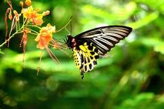Mariposas y flores Imágenes de archivo libres de regalías