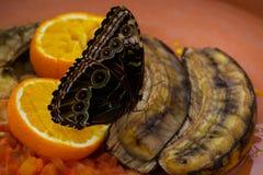 Mariposas y huracanes Fotografía de archivo libre de regalías