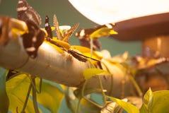 Mariposas y lámpara Imagenes de archivo