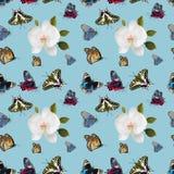Mariposas y orquídeas en un patern inconsútil stock de ilustración