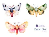 Mariposas y polillas ilustración del vector
