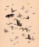 Mariposas y polillas de la acuarela Imágenes de archivo libres de regalías