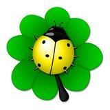 Mariquita amarilla en licencia verde Imagen de archivo libre de regalías