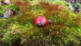 Mariquita en el bosque Fotografía de archivo libre de regalías