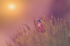 Mariquita en el bosque del musgo Imágenes de archivo libres de regalías