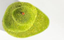 Mariquita en piedras verdes Imagenes de archivo