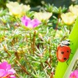 Mariquita en una hoja de la hierba iluminada por el sol en un backgroun Imagen de archivo
