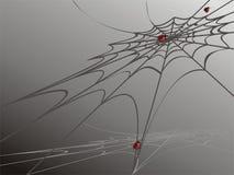 Mariquitas en Web de araña Fotos de archivo