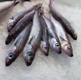 Marisco de los pescados foto de archivo libre de regalías