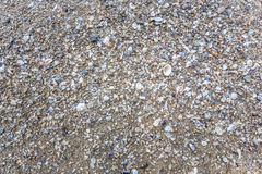 Marisco na praia Imagens de Stock