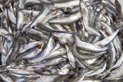 Mariscos congelados en hielo en el supermercado: pescados Entonado como imagen de HDR Imagen de archivo libre de regalías