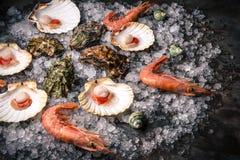 Mariscos crudos: conchas de peregrino, langoustines, camarones y ostras imágenes de archivo libres de regalías