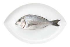 Mariscos de Dorada en un plato oval blanco. Pescados de la brema. imagen de archivo