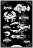 Mariscos de las reses muertas del corte del diagrama del vector Fotografía de archivo libre de regalías