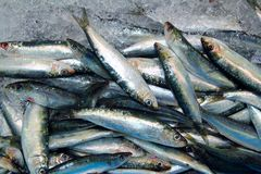 Mariscos de los pescados frescos de la sardina en mercado del mar del hielo Fotos de archivo